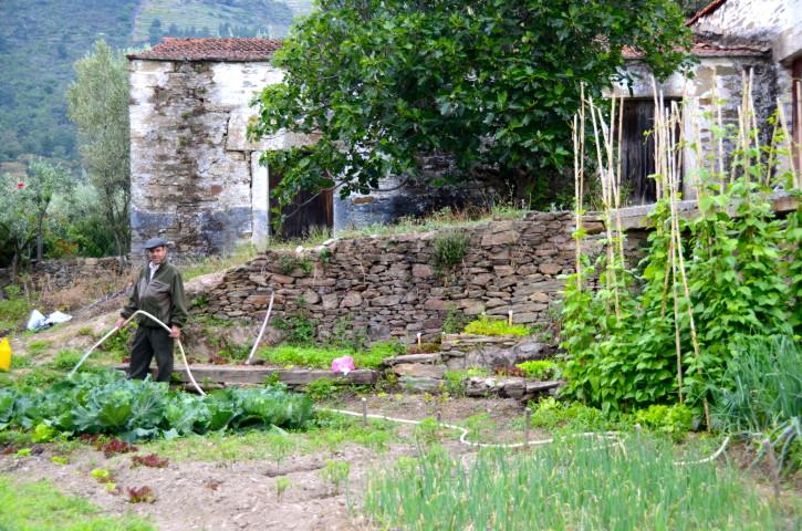 Farmer Douro Valley